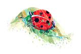 Ladybug Prints by  okalinichenko