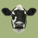 Illustraited Portrait of Cow Posters by  ant_art19
