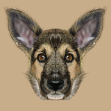 Illustrative Portrait of Shepherd Dog. Cute Puppy with Traditional Colour of Coat. Print by  ant_art19