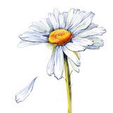Daisy Prints by  okalinichenko