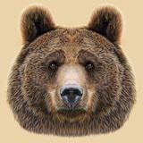 Illustrated Portrait of Bear on Beige Background Póster por  ant_art19