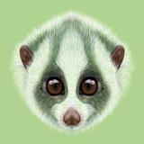 Illustrated Portrait of Slow Loris. Art by  ant_art19