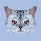 Illustrative Portrait of Scottish Straight Cat. Cute Domestic Tabby Cat with Orange Eyes. Posters by  ant_art19