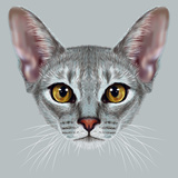Illustrative Portrait of Abyssinian Cat. Cute Breed of Domestic Short Haired Cat with a Distinctive Poster by  ant_art19
