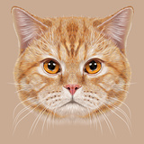Illustration of Portrait British Short Hair Cat. Cute Orange Domestic Cat with Copper Eyes. Posters by  ant_art19