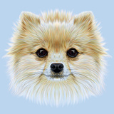Illustrative Portrait of Pom Pom. Cute Head of a White Pomeranian Spitz Dog. Art by  ant_art19