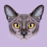 Illustrated Portrait of Burmese Cat. Prints by  ant_art19