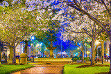 Macon, Georgia, USA Downtown with Spring Cherry Blossoms at 3Rd Street Park. Photographic Print by  SeanPavonePhoto