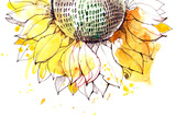 Sunflower Prints by  okalinichenko