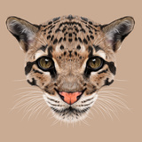 Illustrative Portrait of Clouded Leopard. Posters by  ant_art19