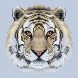 Portrait of a Tiger on Blue Background. Beautiful Face of Big Cat. Print by  ant_art19