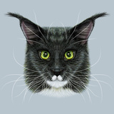 Vector Illustrative Portrait of Maine Coon. Cute Bi-Colour Domestic Cat with Green Eyes. Art by  ant_art19