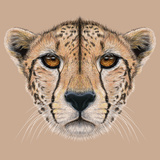 Illustrative Portrait of a Cheetah. the Cute Face of a Cheetah. Premium Giclee Print by  ant_art19