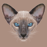 Illustrative Portrait of Siamese Kitten. Cute Domestic Blue Point Kitten with Blue Eyes. Prints by  ant_art19