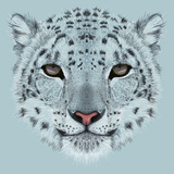 Illustrative Portrait of a Snow Leopard. Irbis or Barys in Winter. Prints by  ant_art19
