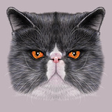Illustrative Portrait of Maine Coon. Cute Bi-Colour Domestic Cat with Green Eyes. Prints by  ant_art19