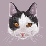Illustration Portrait of Domestic Cat. Cute Young Bi-Colour Cat with Orange Eyes. Posters by  ant_art19