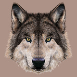 Illustration Portrait of a Wolf. Dark Grey Fur Colour. Plakater af ant_art19