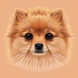 Illustrative Portrait of Pom Pom. Cute Head of a Sable Pomeranian Spitz Dog. Premium Giclee Print by  ant_art19