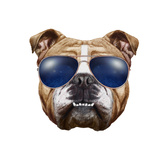 Original Drawing of English Bulldog with Sunglasses. Isolated on White Background. Prints by  victoria_novak