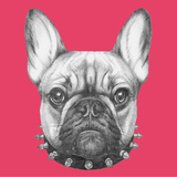 Original Drawing of French Bulldog with Collar. Isolated on Colored Background. Posters by  victoria_novak