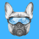 Portrait of French Bulldog with Ski Goggles. Hand Drawn Illustration. Posters by  victoria_novak