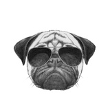 Original Drawing of Pug Dog with Sunglasses. Isolated on White Background Posters by  victoria_novak