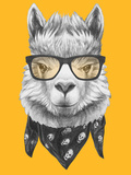 Portrait of Lama with Glasses and Scarf. Hand Drawn Illustration. Print by  victoria_novak