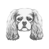 Portrait of Cavalier King Charles Spaniel. Hand Drawn Illustration. Posters by  victoria_novak