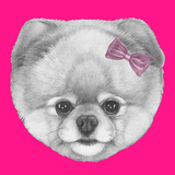 Original Drawing of Pomeranian with Pink Bow. Isolated on Colored Background. Premium Giclee Print by  victoria_novak