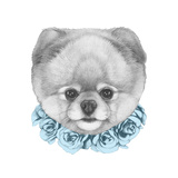 Original Drawing of Pomeranian with Floral Wreath. Isolated on White Background. Art by  victoria_novak