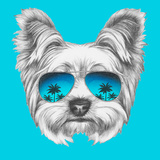 Portrait of Yorkshire Terrier Dog with Mirror Sunglasses. Hand Drawn Illustration. Posters by  victoria_novak