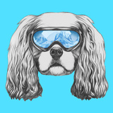 Portrait of Cavalier King Charles Spaniel with Ski Goggles. Hand Drawn Illustration. Prints by  victoria_novak