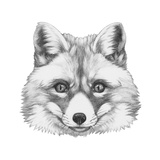 Original Drawing of Fox. Isolated on White Background Print by  victoria_novak