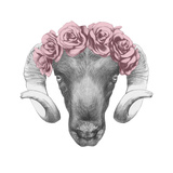 Original Drawing of Ram with Roses. Isolated on White Background Print by  victoria_novak