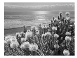 Protea And Pacific Prints by Murray Bolesta
