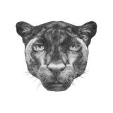 Portrait of Panther. Hand Drawn Illustration. Premium Giclee Print by  victoria_novak