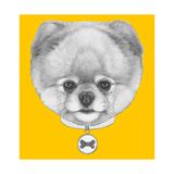 Original Drawing of Pomeranian Dog with Collar.Isolated on Colored Background. Premium Giclee Print by  victoria_novak