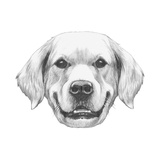 Portrait of Golden Retriever. Hand Drawn Illustration. Prints by  victoria_novak