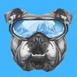 Portrait of English Bulldog with Ski Goggles. Hand Drawn Illustration. Poster by  victoria_novak