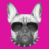 Original Drawing of French Bulldog with Collar and Sunglasses. Isolated on Colored Background. Prints by  victoria_novak