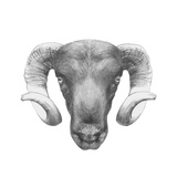 Original Drawing of Ram. Isolated on White Background Prints by  victoria_novak