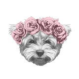 Original Drawing of Maltese Poodle with Floral Head Wreath. Isolated on White Background. Prints by  victoria_novak