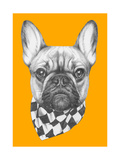 Original Drawing of French Bulldog with Scarf. Isolated on Colored Background Poster by  victoria_novak