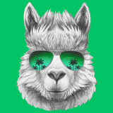 Portrait of Lama with Mirror Sunglasses and Scarf. Hand Drawn Illustration. Reprodukcje autor victoria_novak