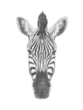 Portrait of Zebra. Hand Drawn Illustration. Posters by  victoria_novak