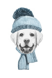 Portrait of Labrador with Hat and Scarf. Hand Drawn Illustration. Prints by  victoria_novak