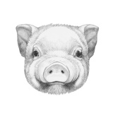 Portrait of Piggy. Hand Drawn Illustration. Posters by  victoria_novak