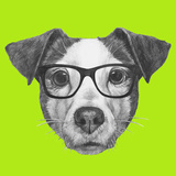 Original Drawing of Jack Russell with Glasses. Isolated on Colored Background. Art by  victoria_novak