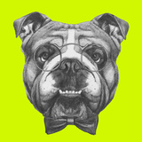 Original Drawing of English Bulldog with Glasses and Bow Tie. Isolated on Colored Background. Prints by  victoria_novak